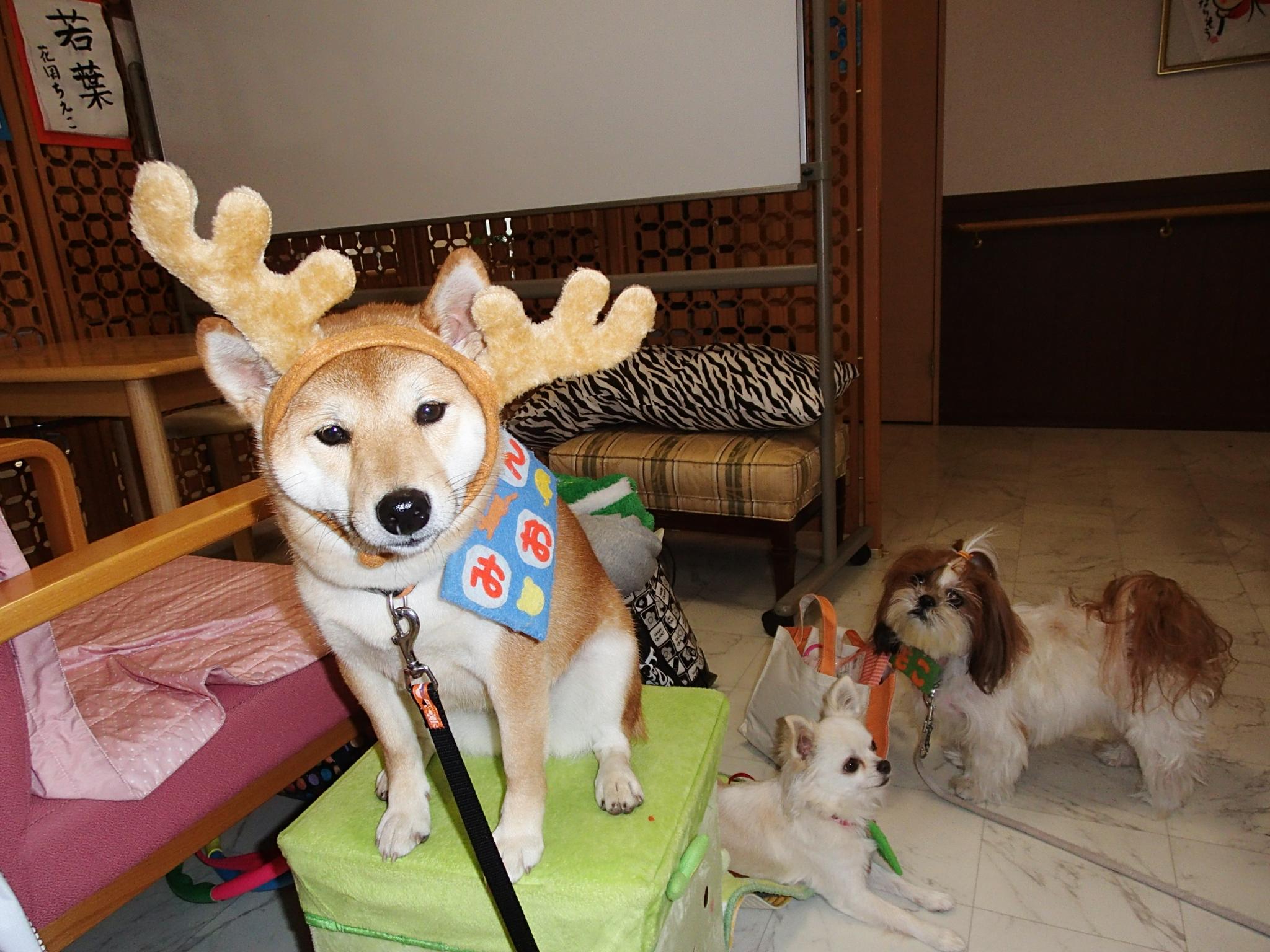 serapi-dog12gatu-002.jpg
